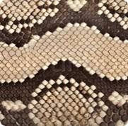 Tan Python